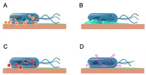 Bacterieopkoper